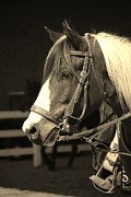 Equine Pyrography - Pinto Black and White by Donna Stiffler