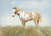 Sorrel Prints - Pinto Filly Print by Betty LaRue