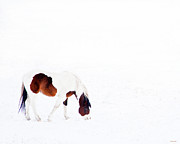 Winterscape Posters - Pinto Pony Poster by Theresa Tahara