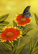 Pipevine Swallowtail Butterfly Prints - Pipevine Swallowtail and Blanket Flower Print by Rick Bainbridge