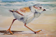 Ocean Shore Pastels Prints - Piping Plover Chick Print by Barbara Richert