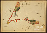Science Source - Pisces Constellation Zodiac Sign 1825