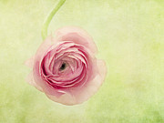 Green Rose Prints - Pistache And Pink Print by Priska Wettstein