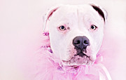 Tammy Chesney - Pit Bull Pink