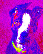 Puppies Digital Art Metal Prints - PitBull Pop Art - 20130125v1 Metal Print by Wingsdomain Art and Photography