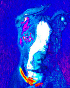 Dogs Digital Art Metal Prints - PitBull Pop Art - 20130125v3 Metal Print by Wingsdomain Art and Photography