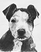 Cute Dogs Drawings Framed Prints - Pitbull Puppy Black and White Framed Print by Kate Sumners