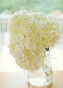 Glass Wall Prints - Pitcher of Hydrangeas Print by Kay Pickens