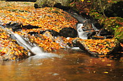 New Hampshire Fall Foliage Prints - Pixies Dance Here Print by Catherine Reusch  Daley