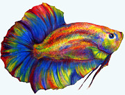 Betta Prints - Plakat Print by Summer Blackhorse