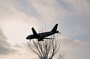 Plane Tree Photos - Plane caught in a Tree by Atousa Raissyan