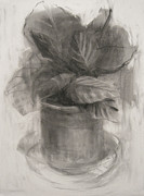 Botanic Drawings - Plant In A Plastic Pot by Steve Dininno
