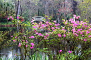 Garden Bridge Posters - Plantation Pond  Poster by Carol Groenen