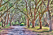 Tree Allee Framed Prints - Plantation Road Framed Print by Dale Powell