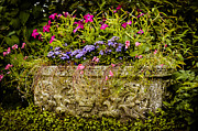 Concrete Planter Framed Prints - Planter Framed Print by Mark Llewellyn