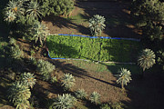 Agronomy Photos - Planting Inside Palm Groves, Southern by Steve Brockett