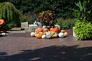 Fall Photos Originals - Plants and Pumpkins and Gourds by Ruth  Housley