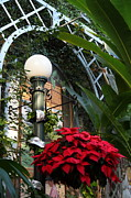 House Prints - Plants - US Botanic Garden - 01135 Print by DC Photographer