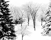 Snow And Trees Framed Prints - Plantsville Snowscape Framed Print by Jan Faul