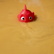 Toys Prints - Plastic fish in some polluted water. Print by Bernard Jaubert
