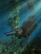 Dreamtime Prints - Platypus Print by Daniel Eskridge