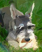 Schnauzer Puppy Framed Prints - Play Ball Framed Print by Patti Siehien