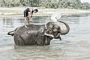 In The Bath Photo Framed Prints - Play time with Mahout Framed Print by Nichon Thorstrom