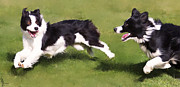 Collie Digital Art Posters - Playful Border Collies Poster by Laura Rothstein