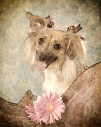 Dog Prints Digital Art - Playful Pup by Angel Pachkowski