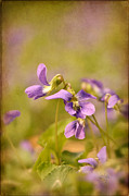 Playful Digital Art - Playful Wild Violets by Lois Bryan