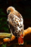 Red Tail Hawk Art - Playing Hard to Get - Fractal by Shelle Ettelson