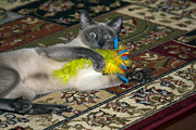Tonkinese Posters - Playtime Poster by Sally Weigand