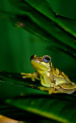 Amphibians Photos - Please Save Israel by Trish Tritz