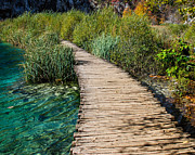 Plitvice Lakes National Park Posters - Plitvice Lake Path Poster by David Waldo