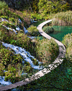 Plitvice Lakes National Park Posters - Plitvice Narrow S Path Poster by David Waldo