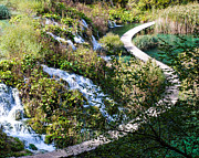 Plitvice Lakes National Park Posters - Plitvice Wide S Path Poster by David Waldo
