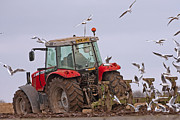 Paul Scoullar - Plough time on the farm.