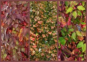 Fall Leaves Posters - Plum Colored Autumn Leaves Poster by Carol Groenen