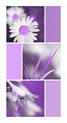 Assorted Framed Prints - Plum Flowers Collage Framed Print by Christina Rollo