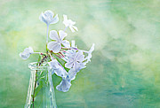 Margaret Hormann Bfa Metal Prints - Plumbago Metal Print by Margaret Hormann Bfa