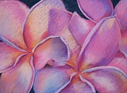 Warm Colors Pastels - Plumeria 2 by Susan M Fleischer