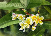 Yellow Leaves Painting Prints - Plumeria Blossoms Print by Sharon Freeman