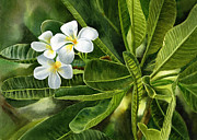 Tropical Flower Painting Posters - Plumeria Leaves Poster by Sharon Freeman