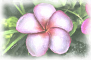 Plumeria Tree Prints - Plumeria Painting Print by Cheryl Young