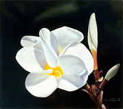 Isolated Pastels Prints - Plumeria Print by Paul Riccardi