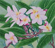 Sweetly Prints - Plumeria Print by Rhonda Leonard