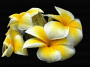 Mayflower Mixed Media Prints - Plumeria Yellow And White Print by Dennis Buckman