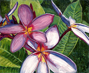 Stacy Vosberg Prints - Plumerias Print by Stacy Vosberg