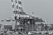 Pnct Facility In Port Newark-elizabeth Marine Terminal II Print by Clarence Holmes