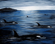 Killer Whale Paintings - Pod on a Mission by Barbara Griffin